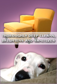 Oakland Upholstery Cleaning